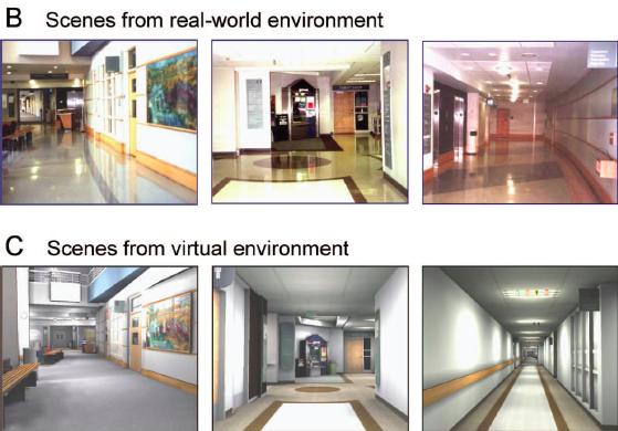 Ilustración 2: Escenarios Reales vs Virtuales 5
